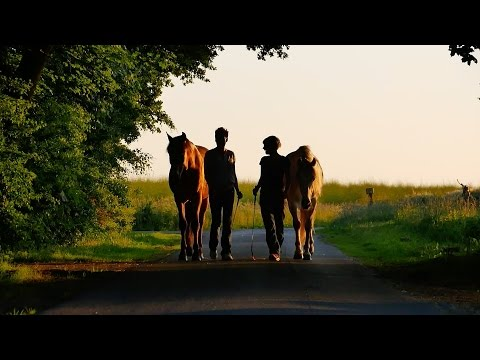 Liberty - Trailer - Natural Horsemanship