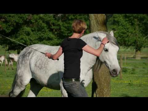 Liberty Groundwork � the foundation for communication between you and your horse