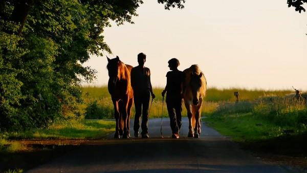 """Zweimal gewonnen! """"Liberty"""" und """"Frei"""". 1. Platz Equinale Horsefilmfesival"""
