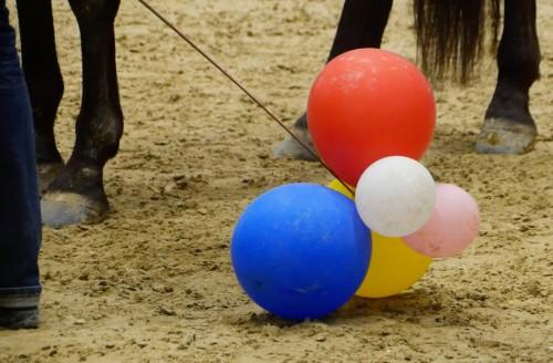 Schrecktraining auf der Hansepferd
