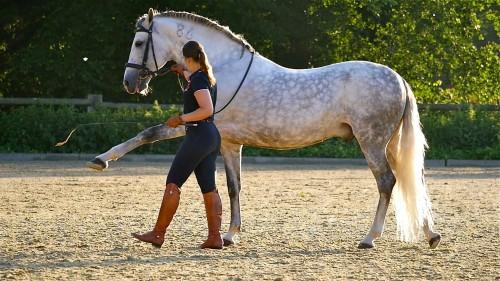 """Neuer Lehrfilm """"Pferde arbeiten an der Hand"""" (Arbeitstitel)"""