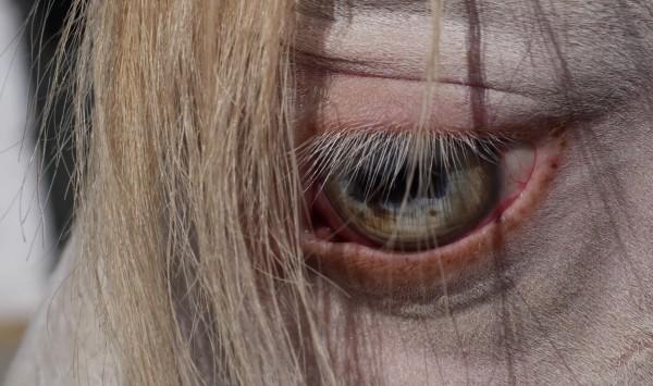 """Imagefilm über das Lusitanogestüt """"La Perla"""" in Spanien."""