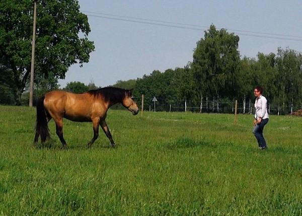 Anleitung: Wie kommt mein Pferd zu mir?